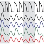 Electrophysiological Instabilities and Arrhythmia Onset